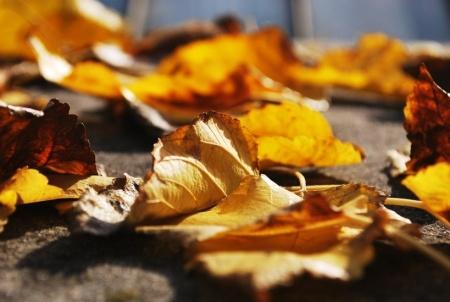 leaf-blur-leaves-ground-large