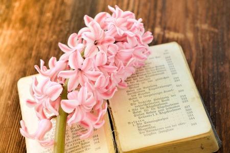 hyacinth-782342_960_720