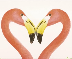 flamingos.heart